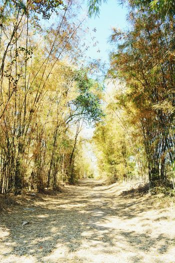 Outdoors Tree Nature Sky Bamboo Gordon Forest Rural