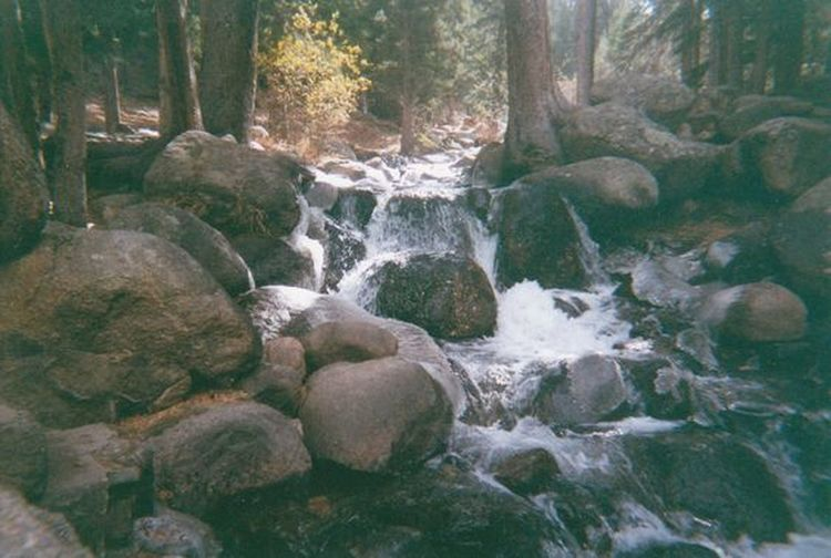 Bubbling stream in the Rocky Mountains. Colorado Stream In The Mountains Stream In Woods Beauty In Nature Boulders Bubbling Stream Day Forest Long Exposure Motion Nature No People Outdoors Rock - Object Rocks Rocks And Water Rocky Mountains Scenics Stream Stream - Flowing Water Tree Water Waterfall