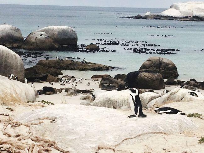Lovemyjob Beauty In Nature Ocean Nofilter#noedit Wanderlust Crewlife Sand Nature Penguins Capetown Bouldersbeach