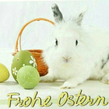 Frohe Ostern! Ostern Froheostern заяц фото Photo