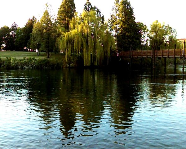 Water Reflection Lake Tree Calm Tranquility Tranquil Scene Day Scenics Park Growth Waterfront Standing Water Outdoors Nature Sky Green Color Beauty In Nature No People Green