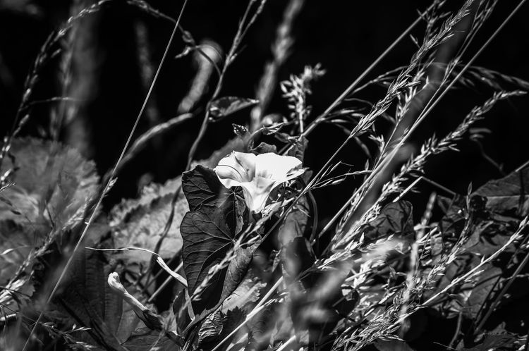 Black And White WoodLand Nature_collection Nature Beauty In Nature Hedge Row Beauty Close-up Plant Farmland Agricultural Field Straw