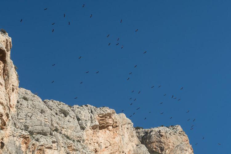 Andalusia Griffon Vulture Hawk Birds Caminito Del Rey Gänsegeier Mountain Vulture