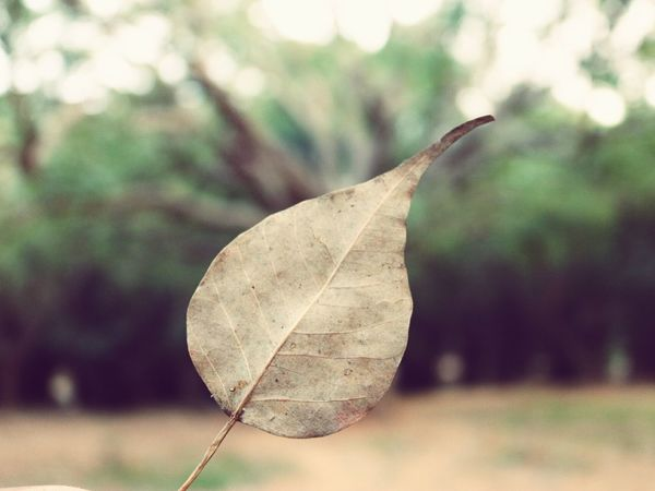the life behind the life EyeEm Selects Nature Day Outdoors Close-up Plant Leaf No People Fragility