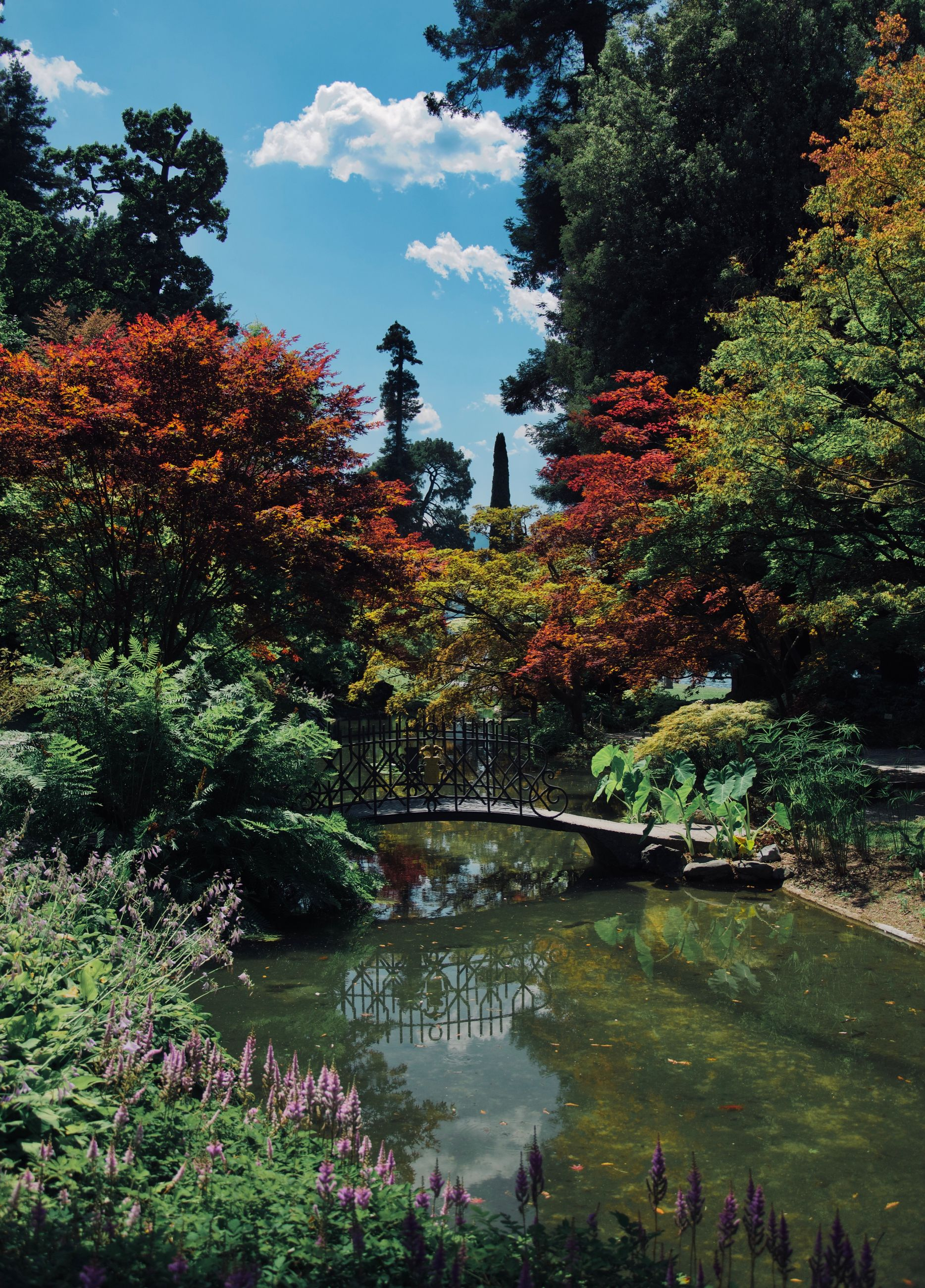 plant, tree, water, nature, lake, day, growth, reflection, group of people, bridge, architecture, built structure, beauty in nature, park, connection, bridge - man made structure, park - man made space, formal garden, outdoors, change