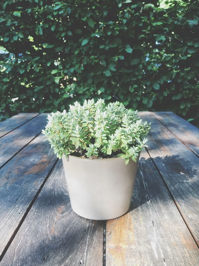 No People Freshness Close-up Outdoors Plant Part Beauty In Nature Wood - Material Table Shadow Sunlight