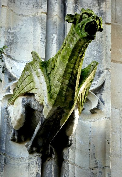 Animal Themes Animals In The Wild Church Eglise Gargouille Gargoyle Green Color No People Old One Animal Wildlife