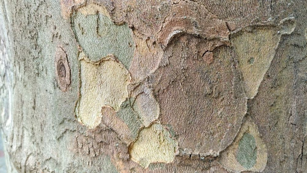 Green Haki Bark Of A Tree Bark Bark Texture Background Nature Outdoors No People Day Close-up Pattern Rough Abstract Backgrounds Textured  Textured  Beauty Tree