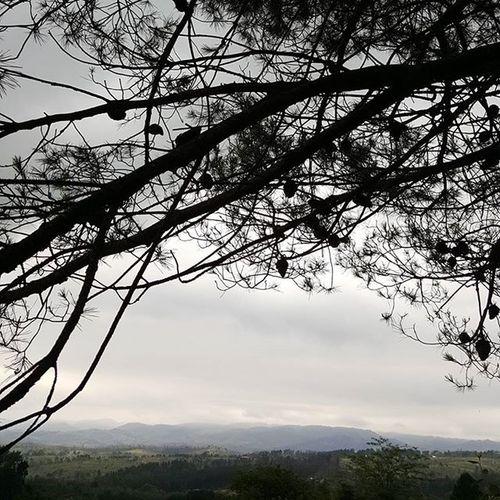 Saludando a mi hermoso pino Yacanto Cordobaquelindaquesos Dayoff Rain Lxl Wonderlust Landscape Igerscordoba Travelgram Picoftheday @ig_cordobaarg