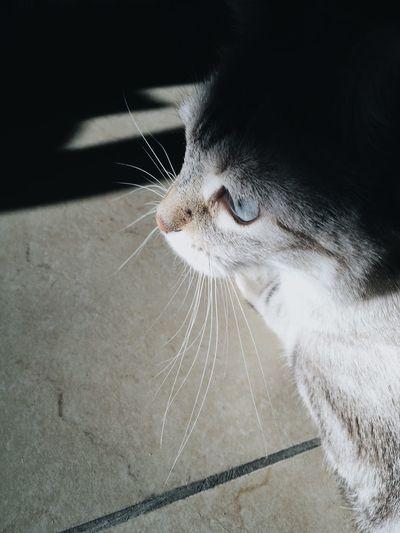 Light VSCO Vacocam Animal Themes Cat Shadow Shadows & Lights EyeEm Gallery EyeEm Nature Lover EyeEm Best Shots EyeEmNewHere EyeEmBestPics
