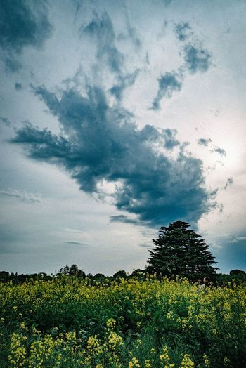 Plant Tree Sky Cloud - Sky Beauty In Nature Nature Growth Environment Scenics - Nature Green Color Landscape Tranquil Scene Outdoors No People Land Grass Field Tranquility Day Agriculture