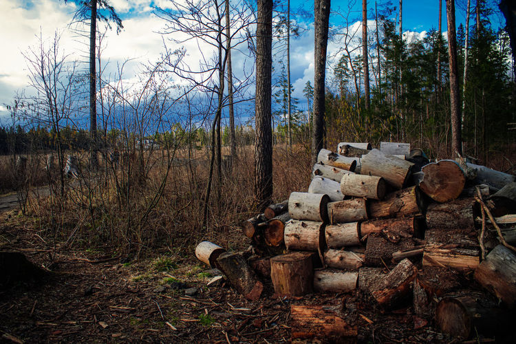 Stack of logs on field in forest