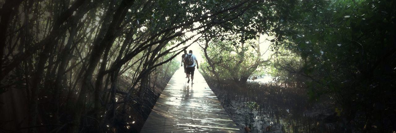 Slicing mangrove. Traveling Bali Nature Landscape