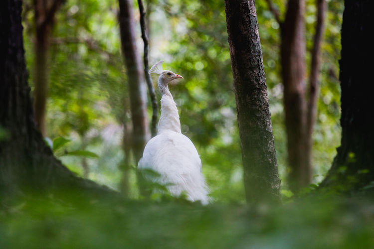 Bird in a forest