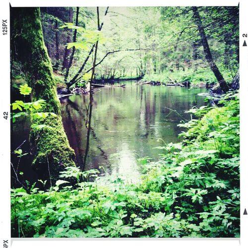 Nature_ Collection  Landscape Sweden Forest