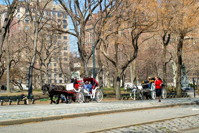 CentralPark Spring! Travel Photography Let's Do It Chic! Horse Newyork USA Enjoying Life Spring Into Spring Sityscapes