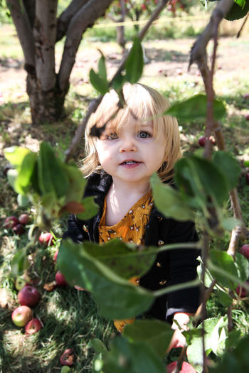 Framed by the Apple Tree Child Childhood Portrait Looking At Camera Cute One Person Innocence Plant Girls Blond Hair Smiling Picking Apples Framed Framed By Nature