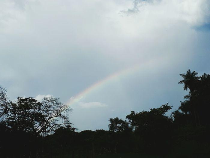 Rainbow Double Rainbow Tree Low Angle View No People Spectrum Nature