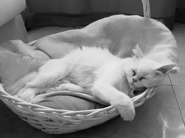 Sleeping time... Domestic Cat Domestic Animals Pets Mammal Indoors  Animal Themes Sleeping Feline Relaxation No People Home Interior Day EyeEm Gallery EyeEmNewHere EyeEm Pet Portraits