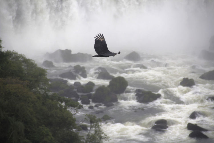Bird flying over a fall