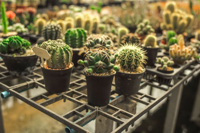 Potted cactus plants on metal grate