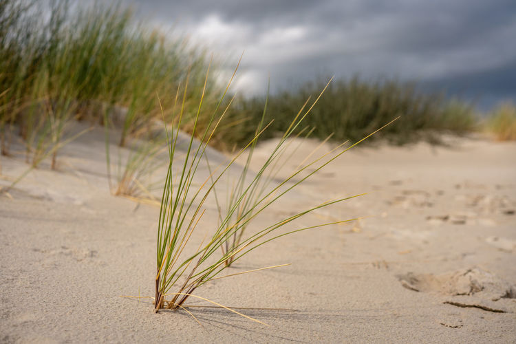Close-Up Of Plant On Sand At Beach Against Sky