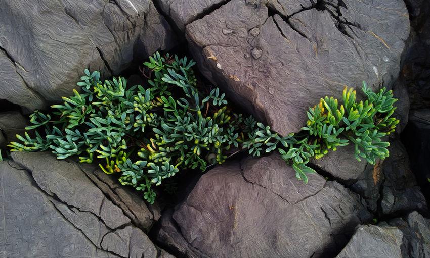#EyeEmEsterlinda Beauty In Nature Botany Coast Green Italy Nature Nature Naturelovers No People Plant Plant Life Rock Formation Sea Wallpaper