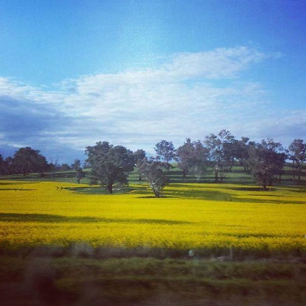 Humehwy Roadtrippin Nearlyhome 🚗 Canola Crops