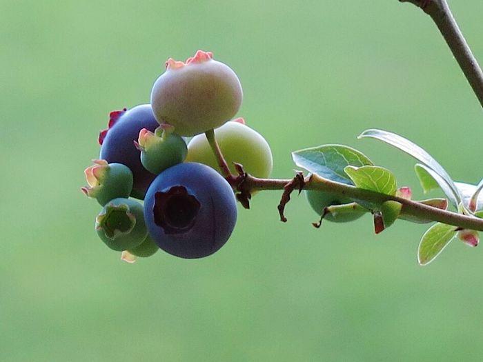 Bluberrys Fruits Nature Photography Macro Photography Naturelover