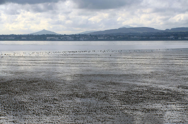 Beach Birds Dublin Bay Low Tide Mountain Outdoors Water