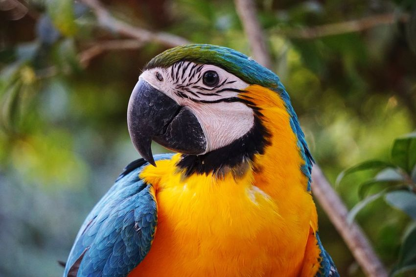 EyeEmNewHere Parrot Bird