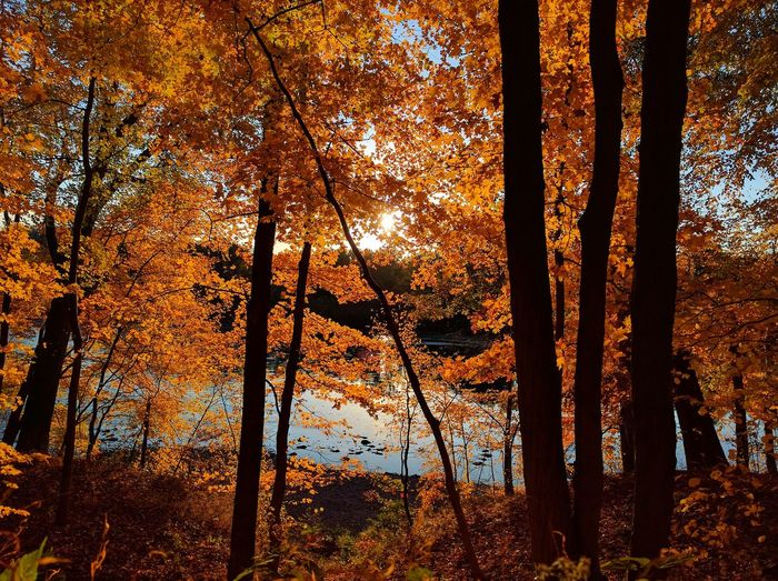 Autumn Beauty In Nature Branch Change Day Forest Growth Landscape Leaf Nature No People Outdoors Scenics Sky Tranquil Scene Tranquility Tree Tree Trunk