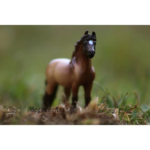 """Oh how I long to run away from normal days! I want to run wild with my imagination!"" -Alice in Wonderland . . Breyer Breyers Breyerhorse Breyerhorses Breyerhorsephotography Modelhorse Modelhorsephotography Modelhorses Toy Toyhorse Toyphotography Photography Macrolens StillLifePhotography"
