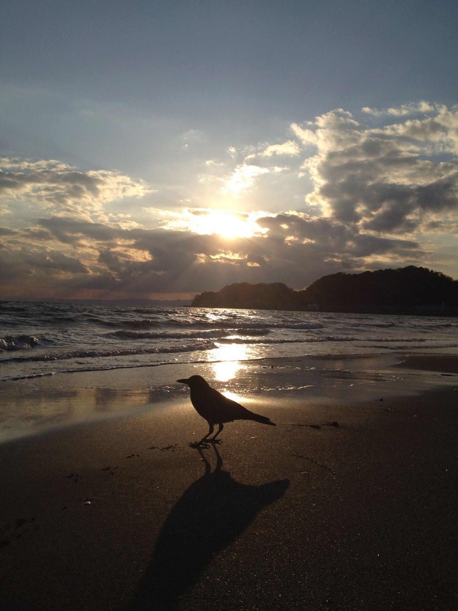 beach, sea, animal themes, shore, water, sunset, one animal, sky, horizon over water, sand, bird, silhouette, beauty in nature, animals in the wild, scenics, tranquil scene, cloud - sky, sunlight, sun, nature