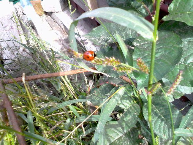 Ladybug Green Plants Ladybeetle Grass Wolfzuachis Eyeem Market