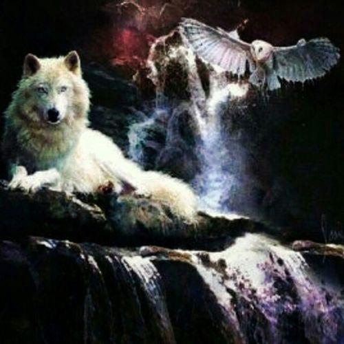💜💫 Spirit Guides💫💜 Wolfspirit Owlspirit Owl Wolf Hearmehowl Animalguides Spiritual