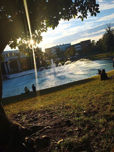 Fountain Sun Sitting Under A Tree Hugging A Tree Nature Relaxing University Campus Beautiful Day