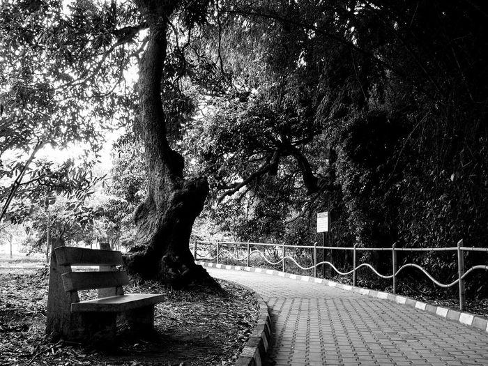 A desolate seat in the lush greenery at the Ranganthittu Bird Sanctuary in Karnataka near Mysore. Blackandwhite Bench Mysore India Travel Photography Ranganathittubirdsanctuary Blavk And White Paved Path Trees Moody