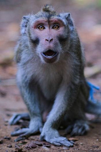 Monkey expression when seeing stranger