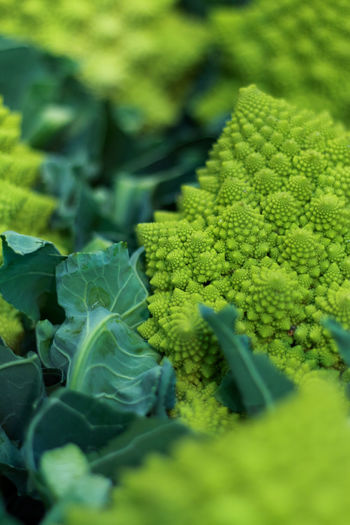 Stock Romanesco Food And Drink Freshness Vegetable Market Vegetables & Fruits Axvo Cabbage Food Foodphotography Fractals Fresh Freshness Green Color Health Healthy Healthy Eating Healthy Food Healthy Lifestyle Nature Romanesco Romanesque Tasty Vegan Vegan Food Vegetable Vegetables