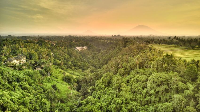 Campuhan Ridge Walk, Ubud, Bali. Bali, Indonesia Bali Campuhan Ridge Walk Travel Destinations Travel Tourist Attraction  Tourism Environment Outdoors Growth Sky Non-urban Scene No People Forest Cloud - Sky Beauty In Nature Landscape Scenics - Nature Tranquil Scene Tranquility Green Color Plant Nature Land Tree