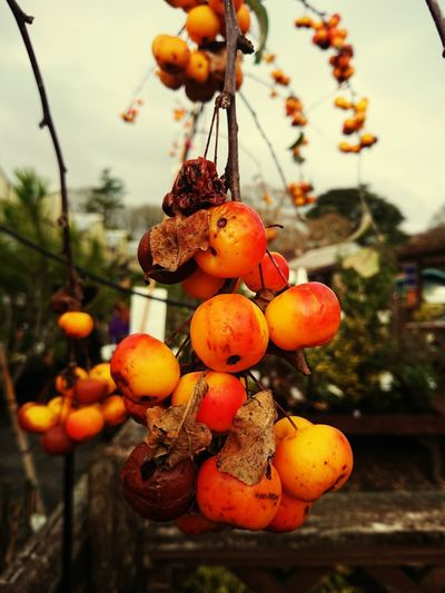 Autumnal decay Orange Burnt Beauty In Nature Decay Autumn colors Autumn Angle Perspectives on Nature Lighting Flower Garden Hanging Sphere Nature Mobilephotography