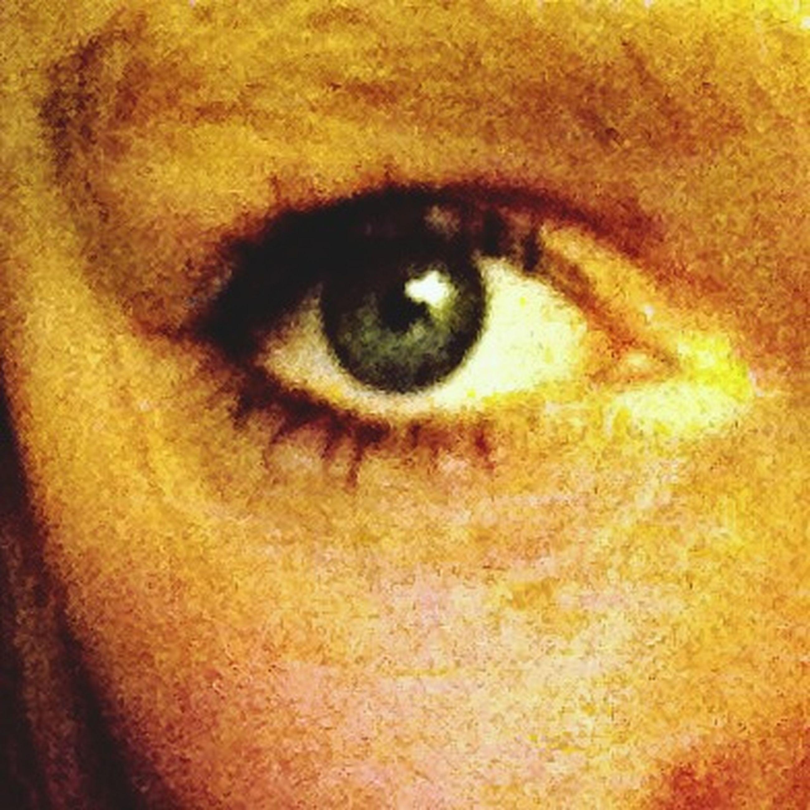 close-up, human eye, looking at camera, part of, eyelash, portrait, indoors, full frame, eyesight, extreme close-up, human skin, human face, sensory perception, backgrounds, extreme close up, eyeball, lifestyles