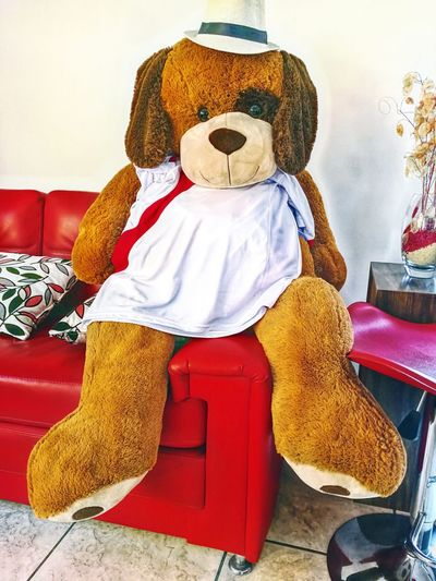 XD Peruvian Friend Friends Childhood Close-up Indoors  No People Sitting Sofa Teddy Bear