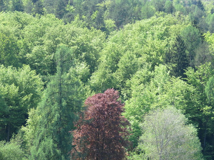 Three different colored trees in front of the forest Tree Trees Forest Tree Sunlight Green Color Woods Greenery Flora Vegetation Green