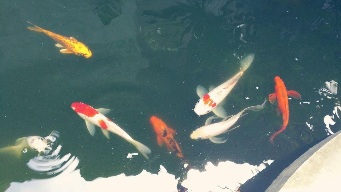 Fish — Asia