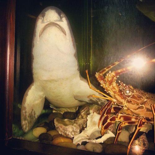 Dinner Lobster Fishtank Catfish Marine