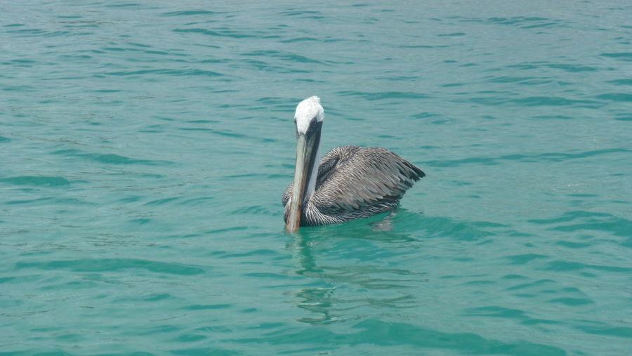 A pelican off