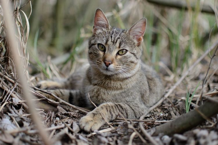 Close-up portrait of cat on field