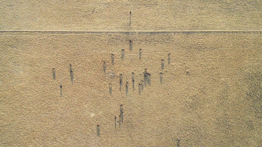 Aerial View Of Cows At Farm